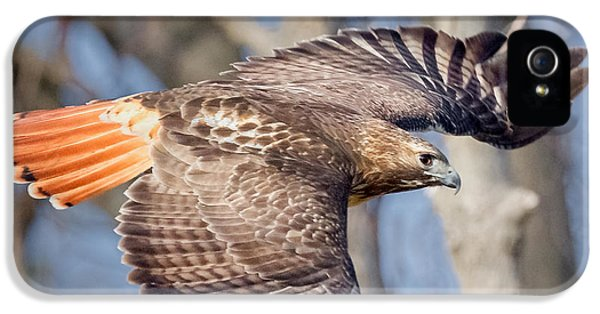 Red Tailed Hawk Flying IPhone 5 Case by Bill Wakeley