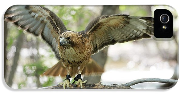 Red-tailed Hawk  IPhone 5 Case by Juli Scalzi