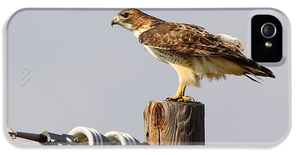 Red Tailed Hawk Perched IPhone 5 Case by Robert Frederick