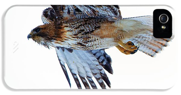 Red-tailed Hawk Winter Flight IPhone 5 Case by Mike Dawson