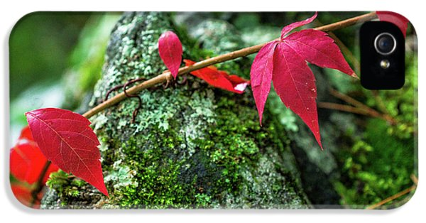 IPhone 5 Case featuring the photograph Red Vine by Bill Pevlor
