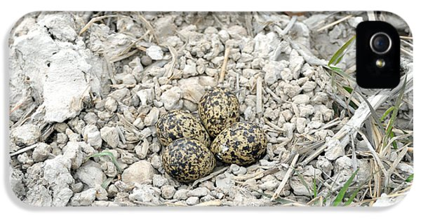Red-wattled Lapwing Nest IPhone 5 / 5s Case by Fletcher & Baylis