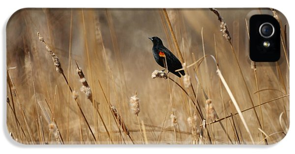 Red Winged Blackbird IPhone 5 / 5s Case by Ernie Echols