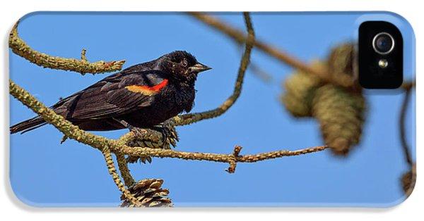 Red-winged Blackbird  IPhone 5 Case by Rick Berk