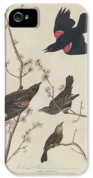Starlings iPhone 5 Case - Red-winged Starling by Dreyer Wildlife Print Collections