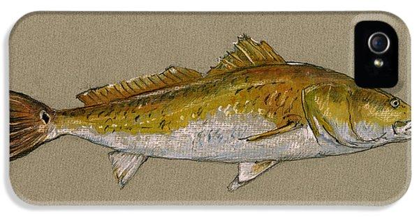 Redfish Painting  IPhone 5 Case by Juan  Bosco