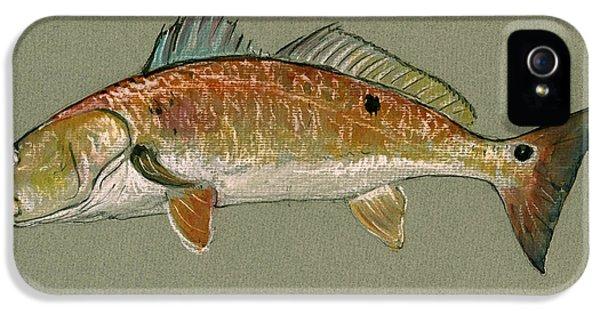 Redfish Watercolor Painting IPhone 5 Case by Juan  Bosco