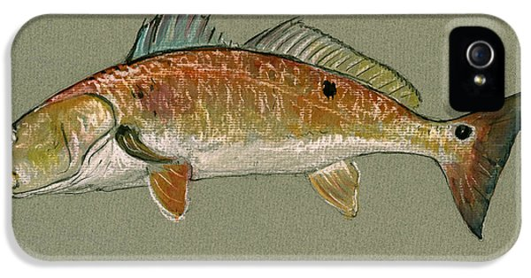 Redfish Watercolor Painting IPhone 5 Case by Juan  Bosco