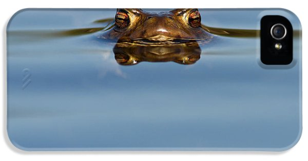 Amphibians iPhone 5 Case - Reflections - Toad In A Lake by Roeselien Raimond