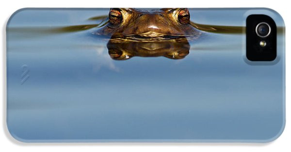 Reflections - Toad In A Lake IPhone 5 Case by Roeselien Raimond