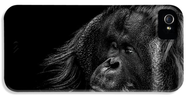 Ape iPhone 5 Case - Respect by Paul Neville