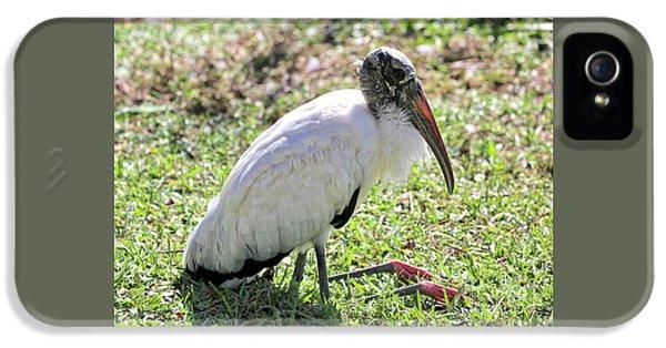 Resting Wood Stork IPhone 5 Case