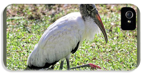 Resting Wood Stork IPhone 5 Case by Carol Groenen