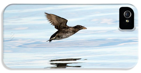 Auklets iPhone 5 Case - Rhinoceros Auklet Reflection by Mike Dawson