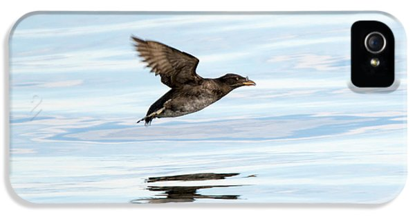 Rhinoceros Auklet Reflection IPhone 5 Case by Mike Dawson