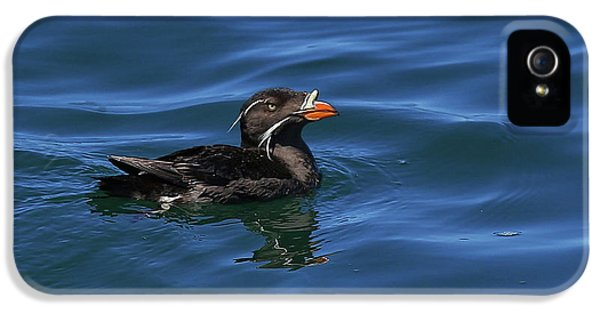 Auklets iPhone 5 Case - Rhinocerous by BYETPhotography