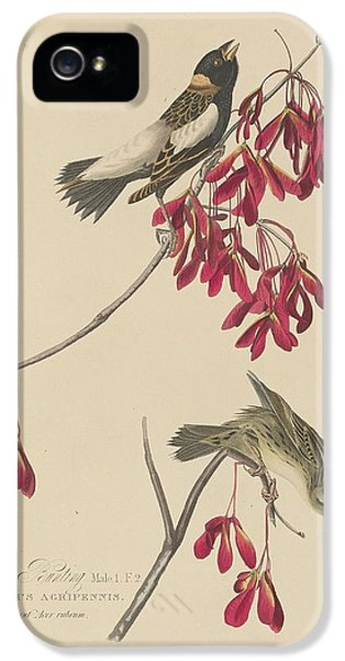 Bunting iPhone 5 Case - Rice Bunting by Dreyer Wildlife Print Collections