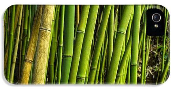 Road To Hana Bamboo Panorama - Maui Hawaii IPhone 5 Case