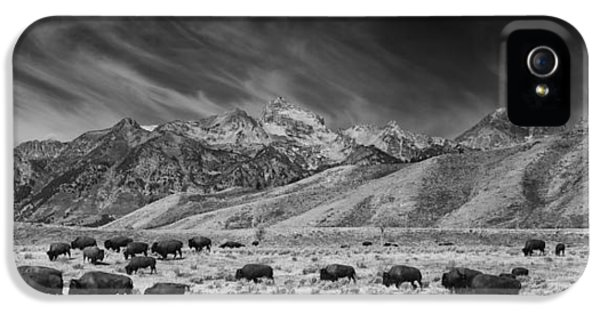 Roaming Bison In Black And White IPhone 5 Case by Mark Kiver