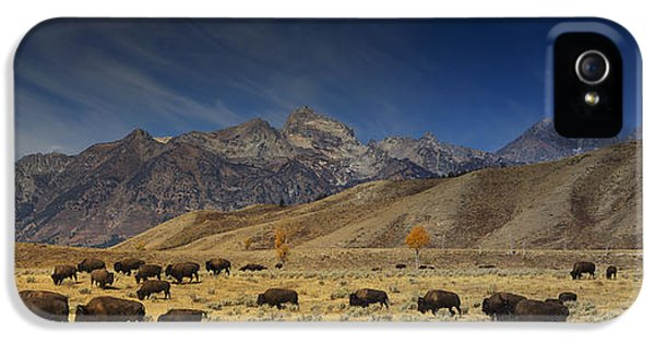 Roaming Bison IPhone 5 Case by Mark Kiver