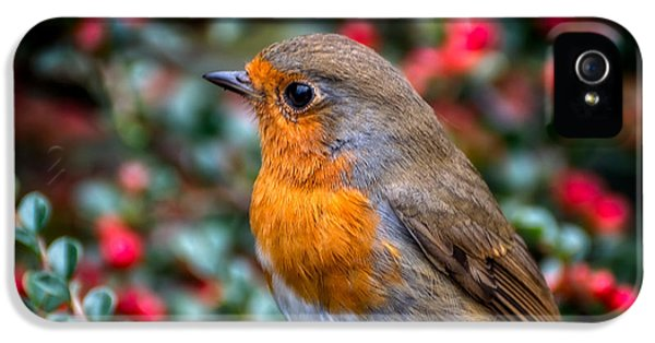 Robin Redbreast IPhone 5 Case by Adrian Evans