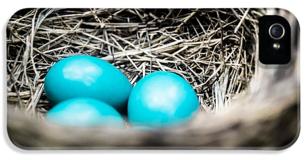 Robin's Eggs IPhone 5 Case by Shelby  Young