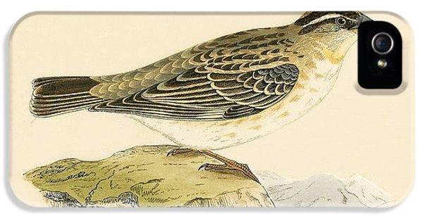 Rock Sparrow IPhone 5 Case