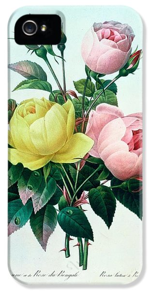 Rosa Lutea And Rosa Indica IPhone 5 / 5s Case by Pierre Joseph Redoute