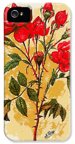 Rosa Mister Lincoln IPhone 5 Case by Andrew Read