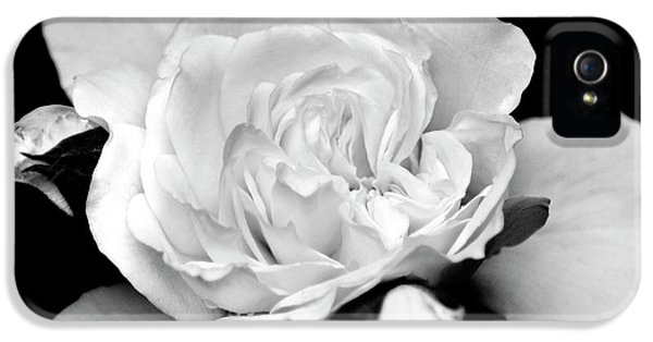 IPhone 5 Case featuring the photograph Rose Black And White by Christina Rollo