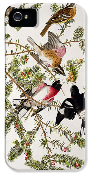 Rose Breasted Grosbeak IPhone 5 Case by John James Audubon