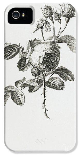Rose IPhone 5 Case by Gerard van Spaendonck