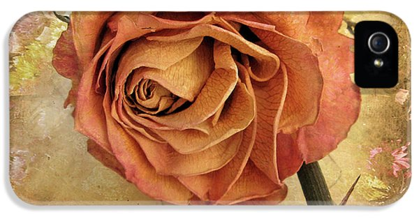 Rose iPhone 5 Case - Rose  by Jessica Jenney