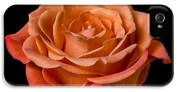 Rose IPhone 5 Case by Jim Hughes