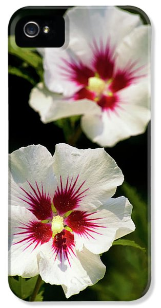 IPhone 5 Case featuring the photograph Rose Of Sharon by Christina Rollo