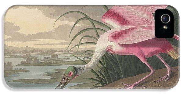 Roseate Spoonbill, 1836  IPhone 5 Case