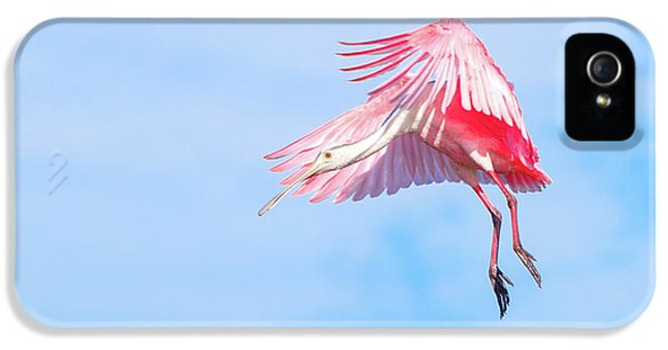 Roseate Spoonbill Final Approach IPhone 5 Case by Mark Andrew Thomas