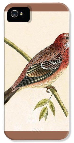 Rosy Bullfinch IPhone 5 / 5s Case by English School