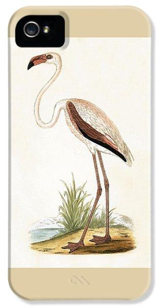 Rosy Flamingo IPhone 5 Case by English School