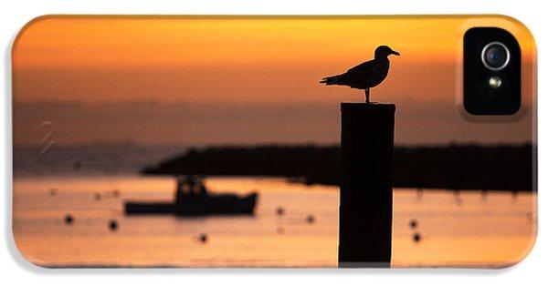 Rye Harbor Sunrise IPhone 5 Case by Eric Gendron