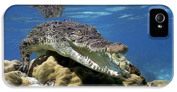 Saltwater Crocodile Smile IPhone 5 Case by Mike Parry