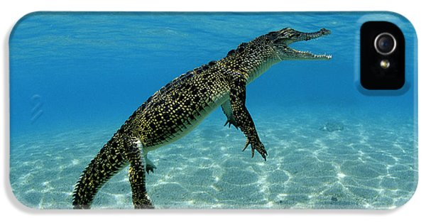 Saltwater Crocodile IPhone 5 Case by Franco Banfi and Photo Researchers
