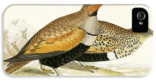 Sand Grouse IPhone 5 / 5s Case by English School