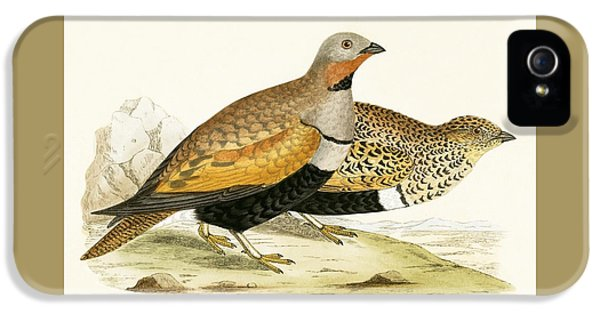 Sand Grouse IPhone 5 Case by English School