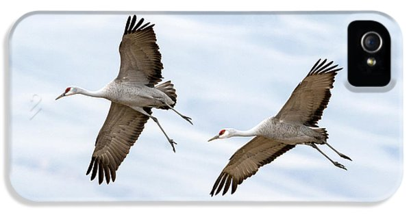 Sandhill Crane Approach IPhone 5 / 5s Case by Mike Dawson