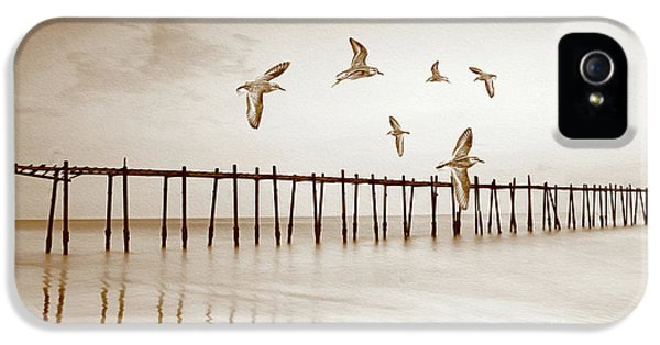 Sandpiper iPhone 5 Case - Sandpipers In Sepia by Laura D Young
