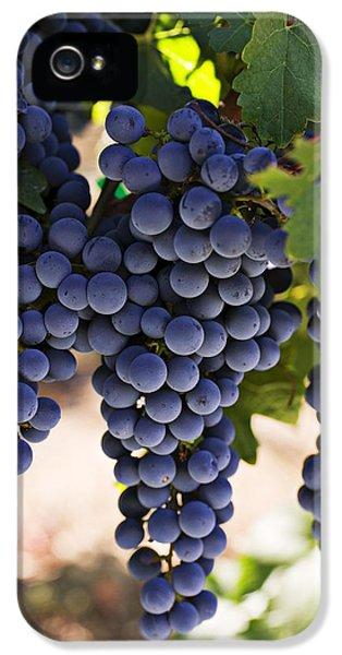 Sauvignon Grapes IPhone 5 Case