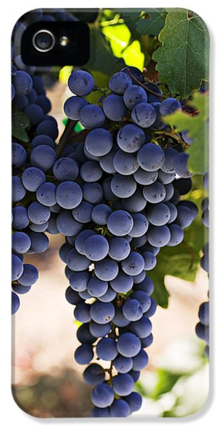 Sauvignon Grapes IPhone 5 Case by Garry Gay