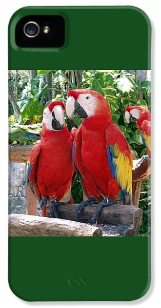Scarlet Macaws IPhone 5 Case by Ellen Henneke