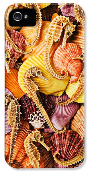 Sea Horses And Sea Shells IPhone 5 Case by Garry Gay